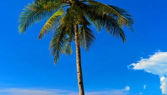 coconut garden bungalow
